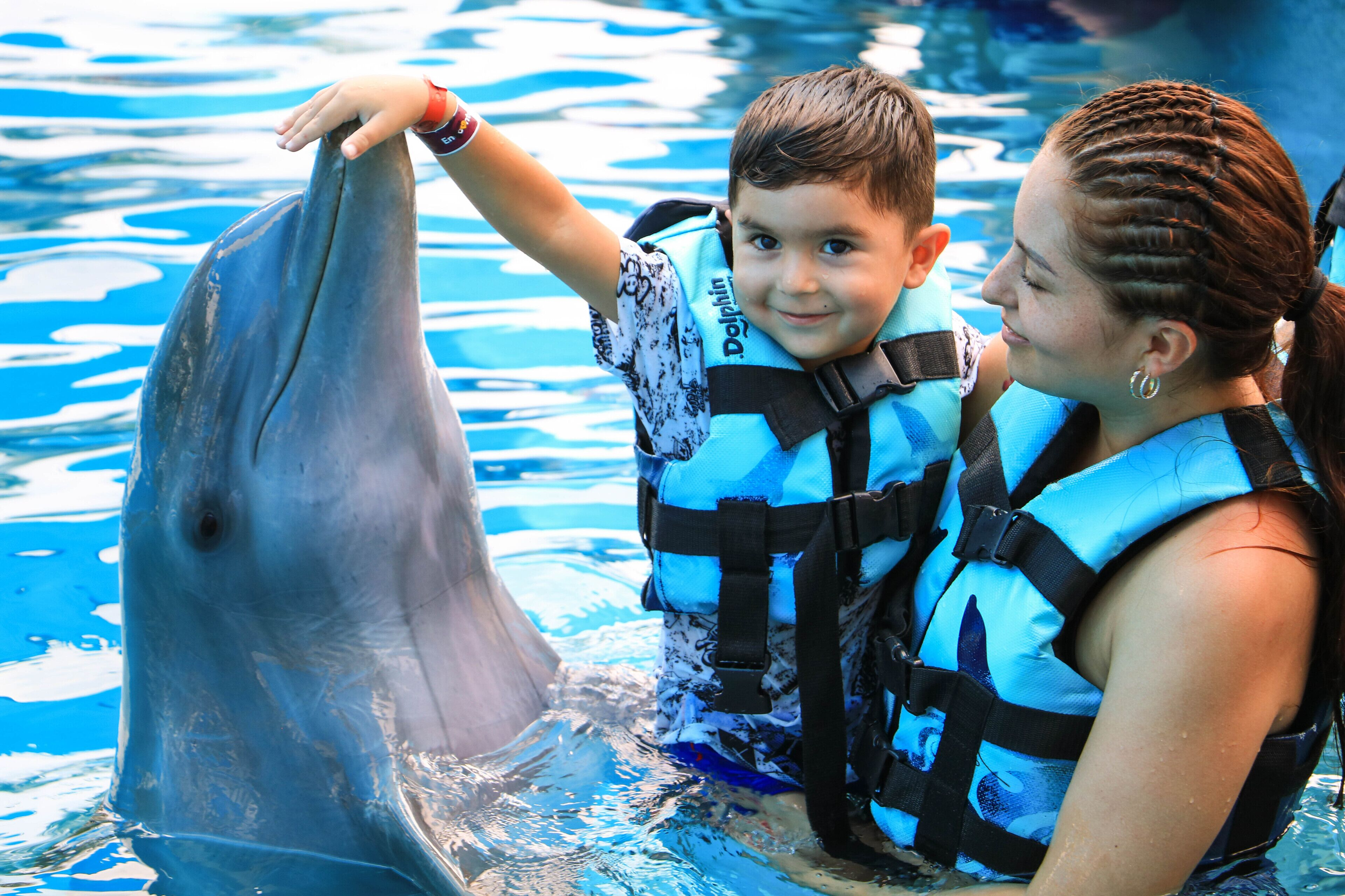 Punta Cana : Nage avec les dauphins | GetYourGuide